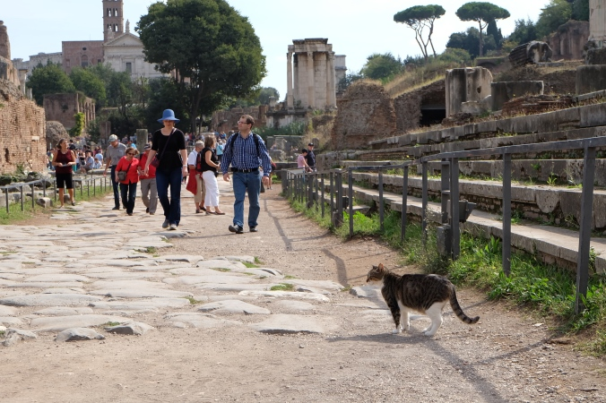 Cat at Roman Forum