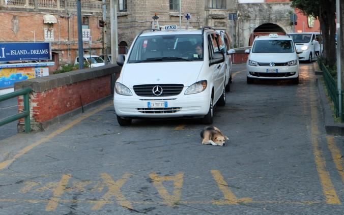 Sleeping dog in Sorrento