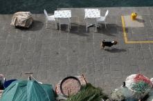 Dog walking along a Sorrento pier