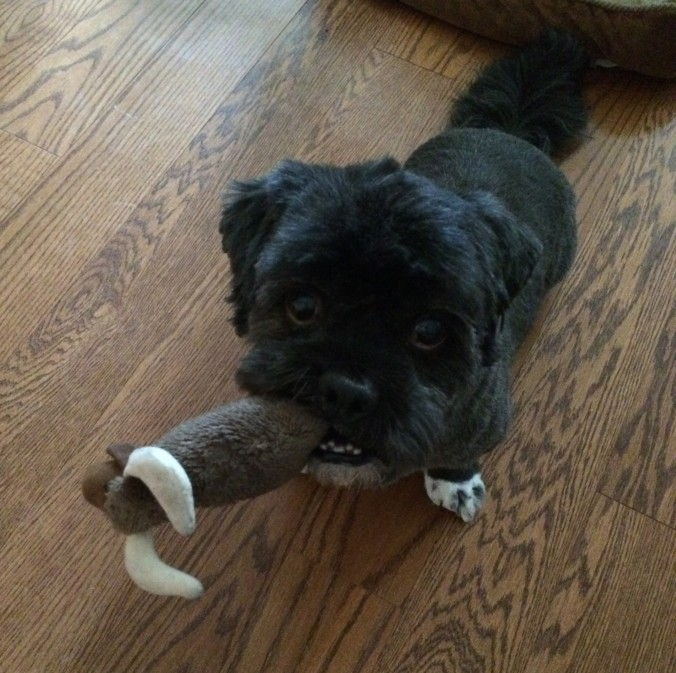 Chewy with his first toy
