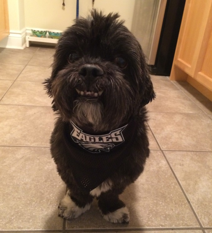 Chewy, fan of the Eagles