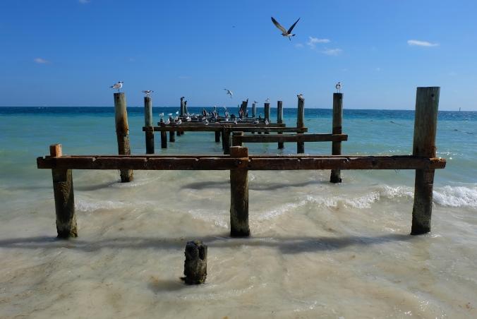 puerto-morelos-birds