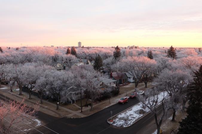 Hoar frost in Saskatoon